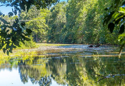204 Eureka Road creek